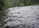 Regen-039